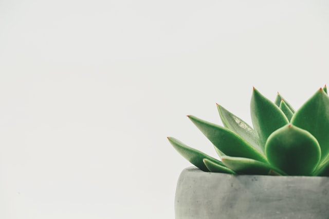 Post Processing Techniques; a close-up, aesthetic picture of a plant with a white background