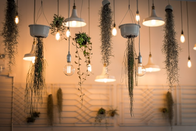 artificial lights and indoor plants hanging from the ceiling